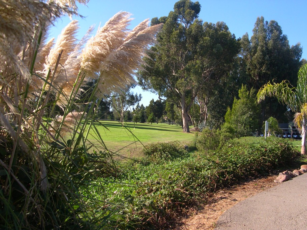 archives alameda citizens task force chuck corica golf course view from near club house 9 26 11